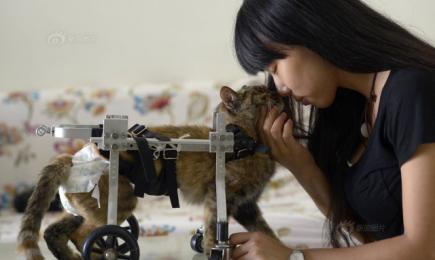 Huisdier eigenaar bouwt rolstoel voor kat
